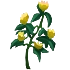 Powerful herbs(374).png
