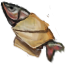 A fish wrapped in a letter(833).png