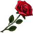 Valentine's Day flower(954).png